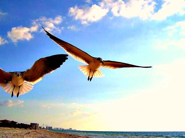 Soul takes flight