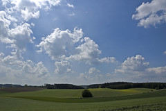 What a beautiful day-Bavaria today —digital cat (Flickr.com)