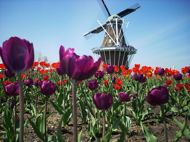 Holland Tulip Festival