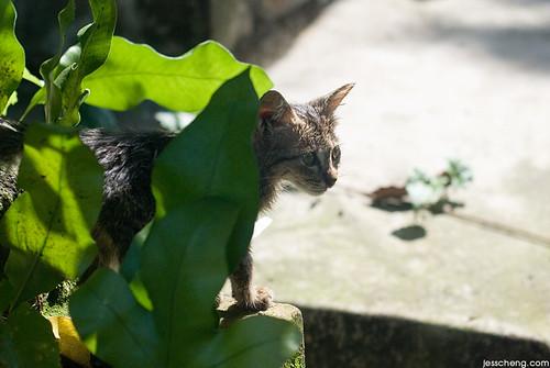 小猫。探视