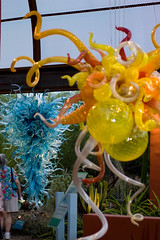 Chihuly at the DBG-217.jpg
