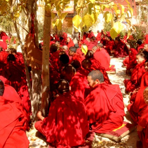 Tibet monks discussing