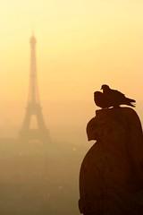 Cliché for pigeons