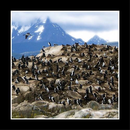 "argentina ushuaia cisco terradelfuoco supershot photographia abigfave theunforgettablepictures ""photographia"""