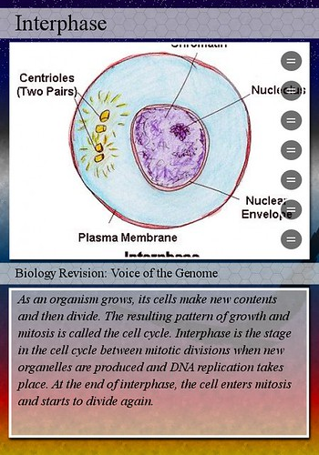 7th grade science chapter 4 the cell cycle flashcards