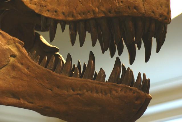 Fauces Fauces de Tyrannosauru...