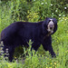 Captive bear .... Wild flowers
