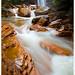 Douglas Falls - Tucker County, West Virginia by [Christine]