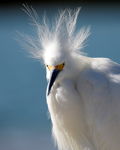 fab thewonderfulworldofbirds superstarthebest copyrightsteveleachpleasecontactphotographeratfoulballverizonnetpriortousagedownloadorreprints allimagesarecopyrittendonotusewithoutpermissionsteveleach