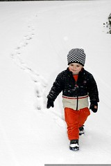 sequoia makes his way down the snowy hill    MG 6441
