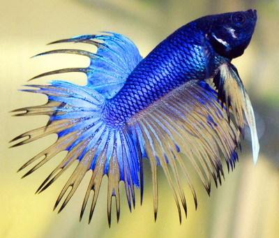 Vantagens dos peixes como bichinhos de estimaçãoPetlove - O Maior Petshop Online do Brasil
