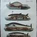 bertuch whal