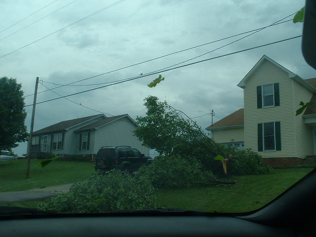 The Tree Fell on the Car