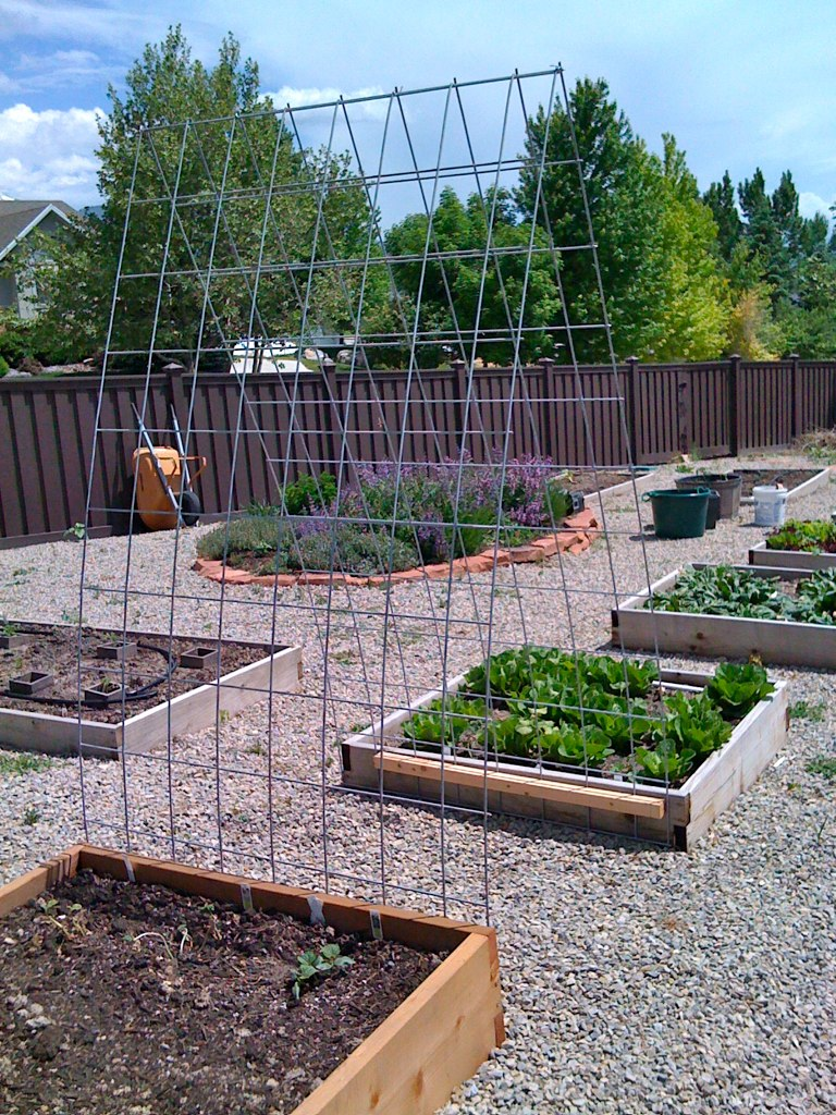 Trellis I made from cattle panel for the cucumbers - a