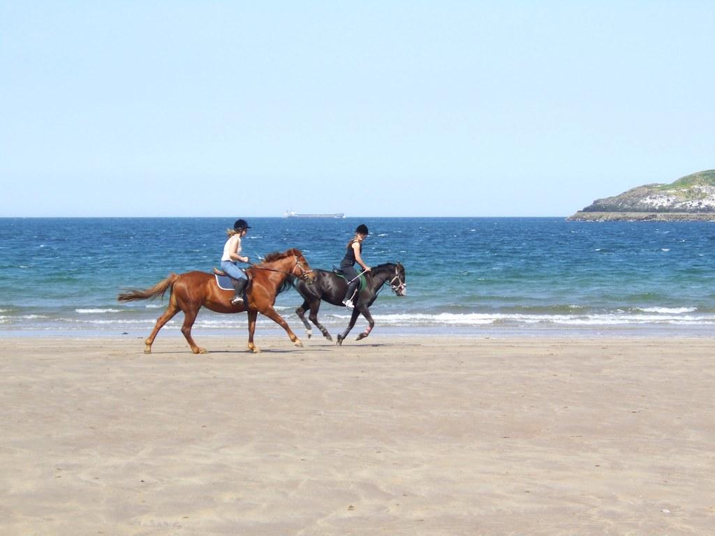 sea horses 3