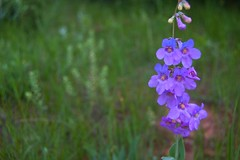 Reynolds Wildflowers