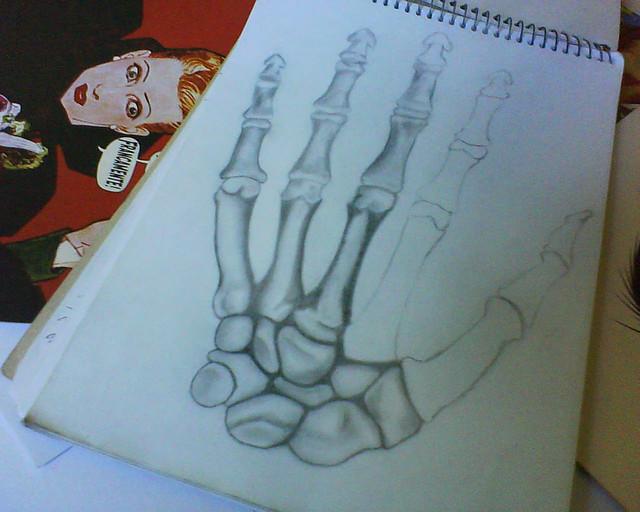 estudo dos ossos da m227o a complexidade dos ossos do