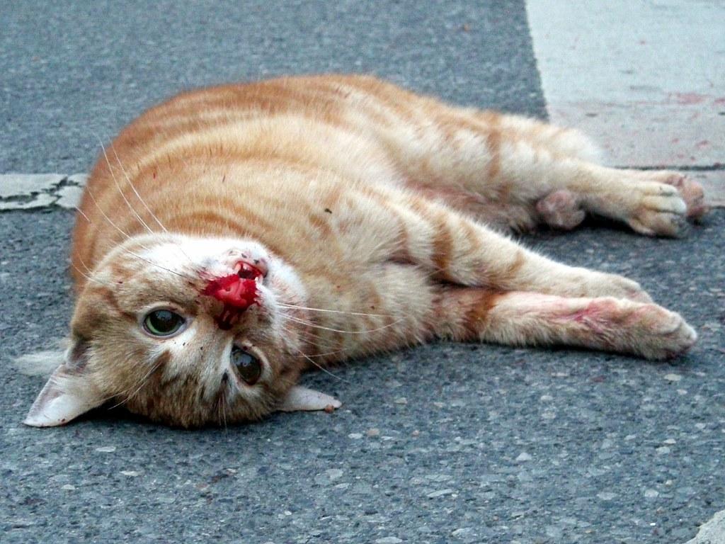 ネコを虐待しようかと思っている 23匹目YouTube動画>6本 ニコニコ動画>3本 ->画像>667枚
