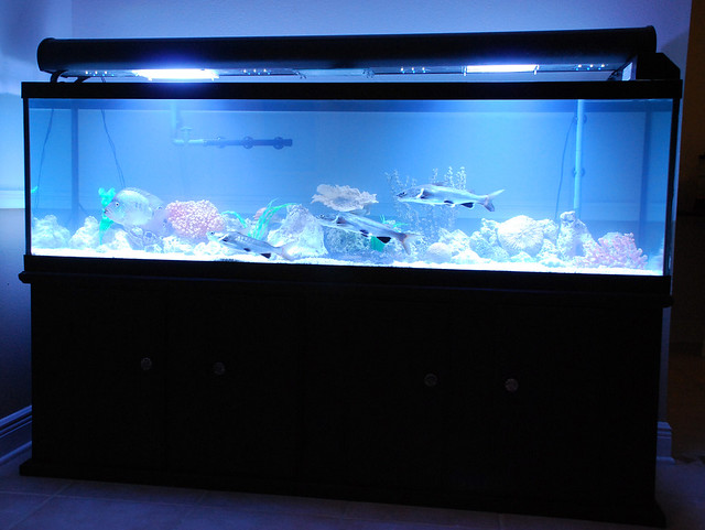 125 Gallon Aquarium : 125 gallon Fish Tank Flickr - Photo Sharing!