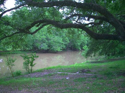 landscape louisiana bayou cajun acadiana bayouteche arnaudville