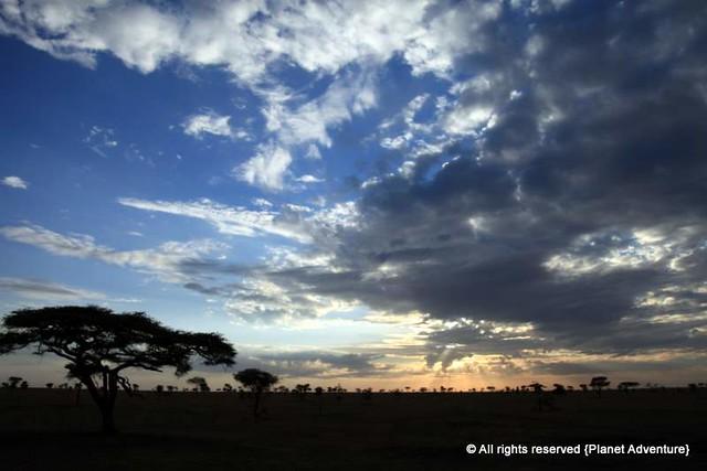 Sunrise   - Serengeti National Park - Tanzania - Africa