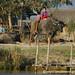 Water Buffalo - Inle Lake, Burma