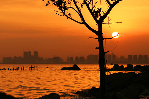 china sunset sea sun seascape macro tree silhouette canon buildings lens rocks asia 100mm mangrove moment cgb stuckinamoment shenzhencity sphinxsaldana