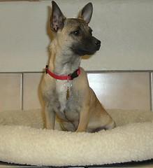 Chico 6 months