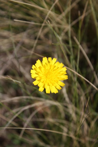 Hovering Flower