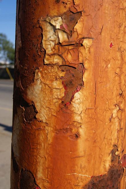 Rust at Bay & Pleasant Streets