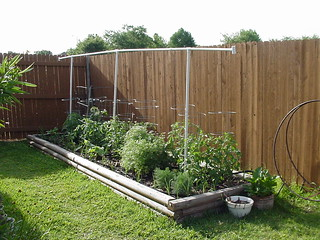 Our vegetable garden