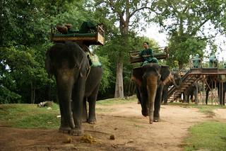 Image of Phnom Bakheng near Siem Reap. elephant geotagged asian photo highresolution cambodia kambodscha flickr cambodian foto khmer pyramid image sommer picture free august cc elephants jpg rap bild siemreap angkor jpeg elefant geo 2009 phnom stockphoto elefanten bakheng bakeng pnom siemreab siemrap kâmpŭchea preăh réachéanachâkr kâmpŭchéa pyramidentempel