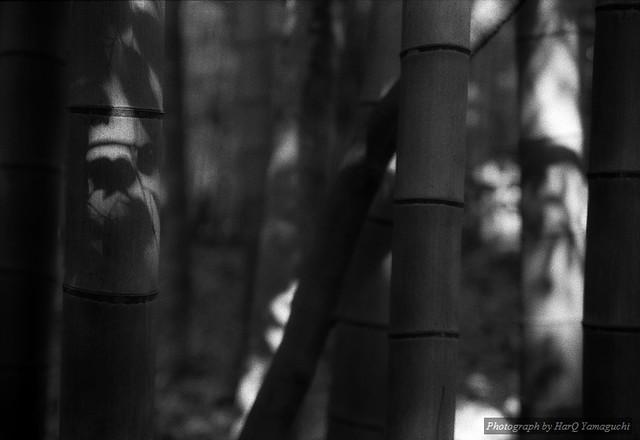 Bamboo #1 / Shisen-do
