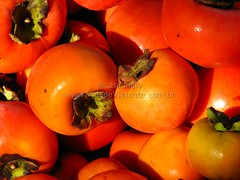 potato and tomato genus, vegetable, produce, fruit, food, winter squash, persimmon,