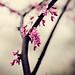 Spring Rain by -Cortni Marie-
