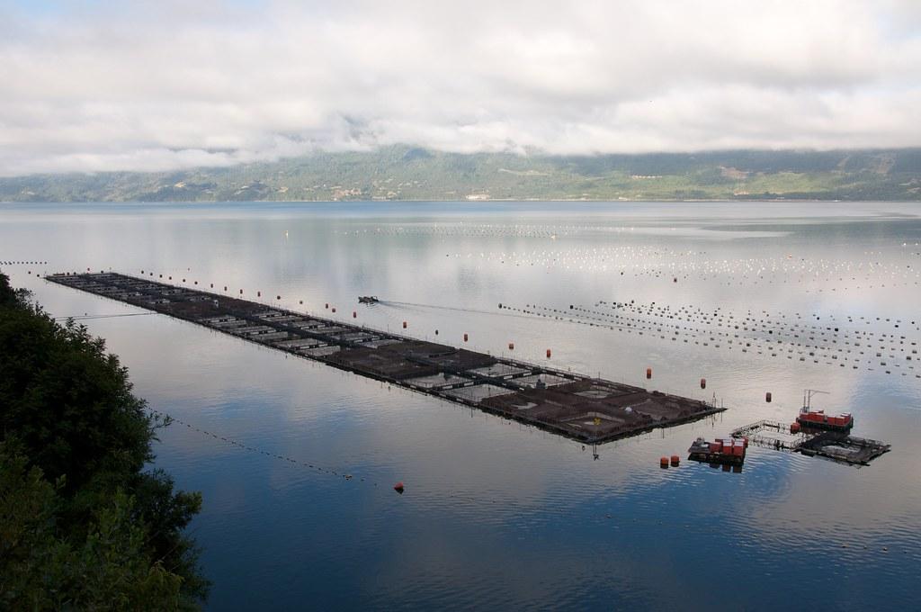 Seaweed-based feed