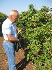 flower(0.0), crop(0.0), agriculture(1.0), shrub(1.0), farm(1.0), garden(1.0), soil(1.0), tree(1.0), plant(1.0), gardener(1.0), produce(1.0), fruit(1.0), food(1.0), plantation(1.0),