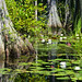 Okefenokee Swamp by ~~Lou~~