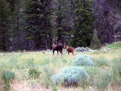 trail(0.0), grazing(0.0), woodland(1.0), prairie(1.0), moose(1.0), meadow(1.0), wilderness(1.0), pasture(1.0), grassland(1.0), wildlife(1.0),