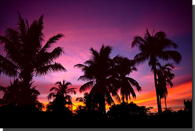 Sunset In Coconut Land - Koh Samui Island