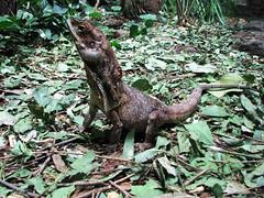 animal, rainforest, reptile, lizard, fauna, iguana, scaled reptile, wildlife,