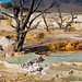 "Mammoth Hot Springs - geothermal mineral terraces #1 of 3 by IronRodArt - Royce Bair (""Star Shooter"")"