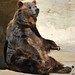 Small photo of Grizzly Bear