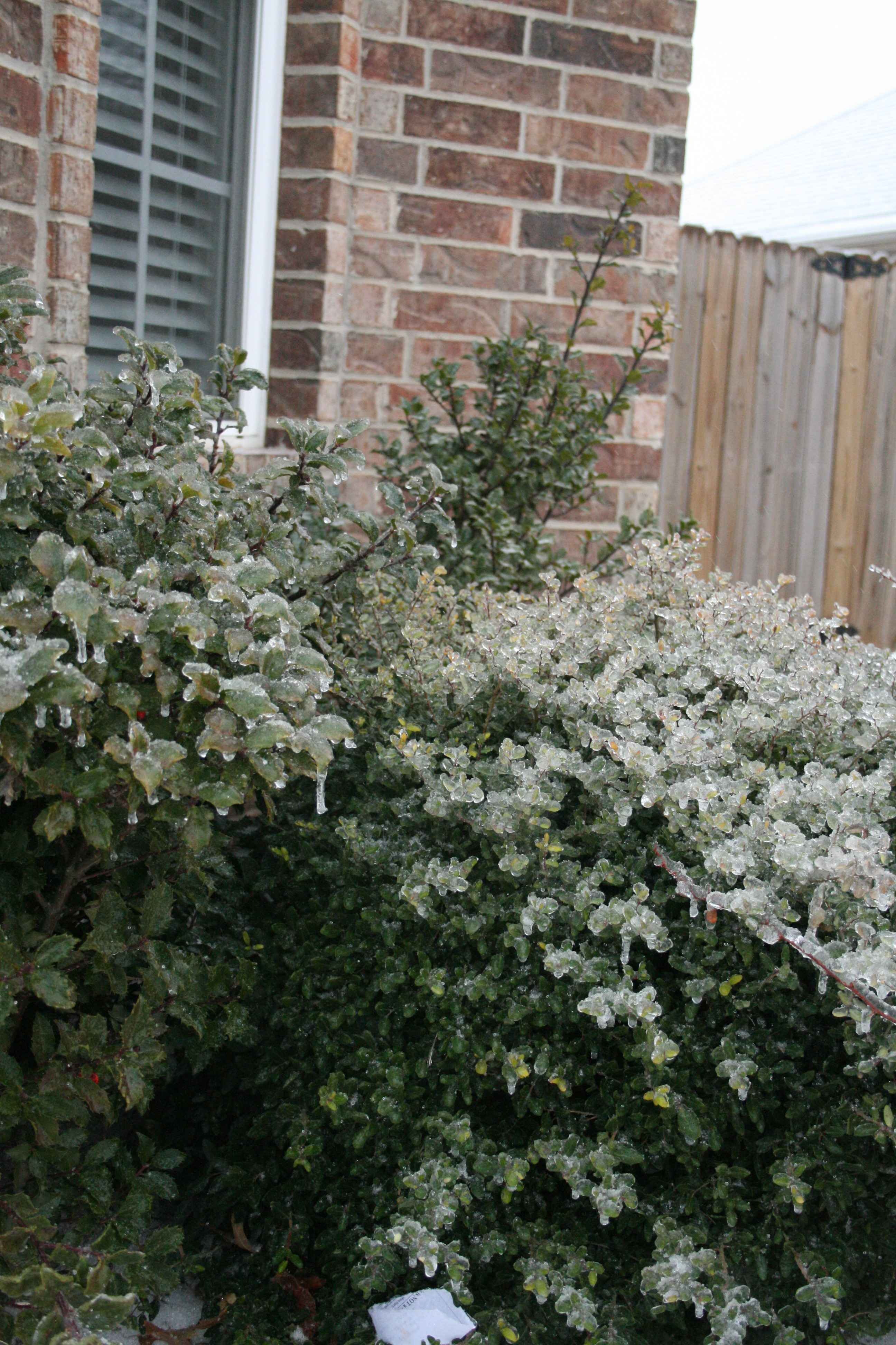 shrubs in front of the house flickr photo sharing. Black Bedroom Furniture Sets. Home Design Ideas