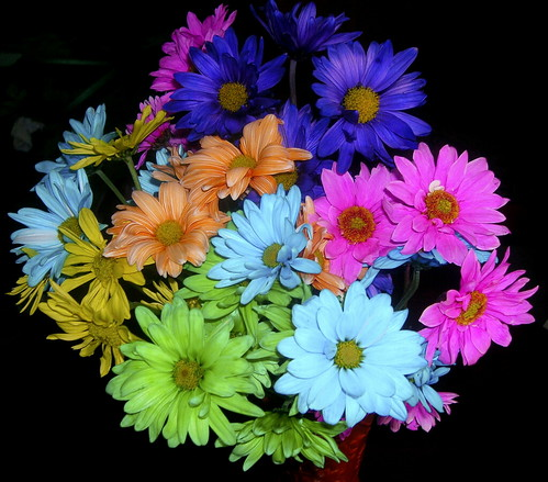 Bouquet of Dasies