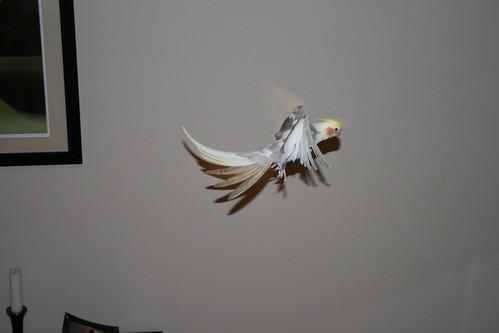 problem of birds