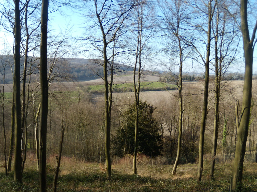 View past trees Petersfield to Rowlands Castle