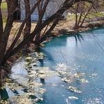 Wylie Pond