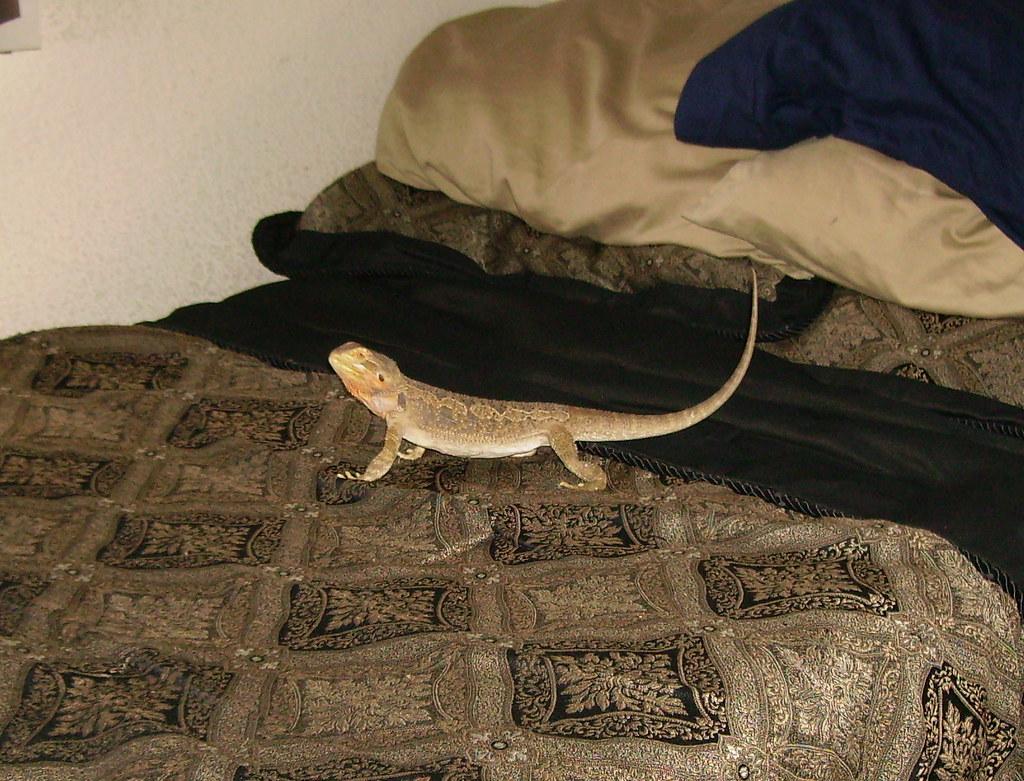 Reptile Rescue Orange County | www reptilerescueoc webs com | Flickr