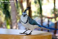 branch(0.0), blue jay(0.0), wildlife(0.0), animal(1.0), fauna(1.0), jay(1.0), beak(1.0), bird(1.0),